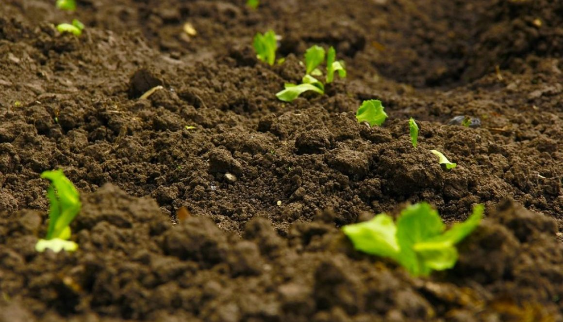 Soil Health, What are Microbes, GROlife