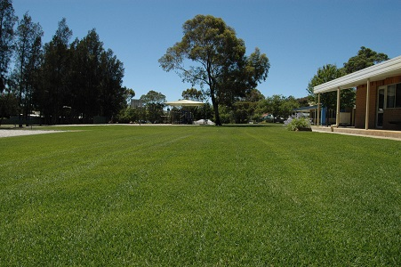 School Oval, 8 Weeks